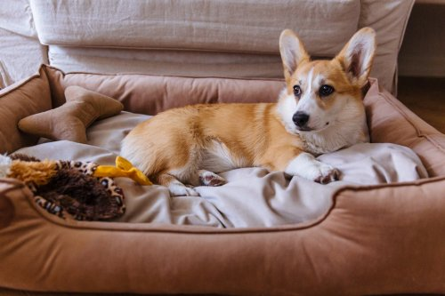 Stylish, comfortable dog beds for all kinds of dogs, and every budget