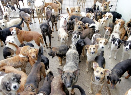 Here are the 10 most expensive breeds of dog that have seen their price tags soar over lockdown