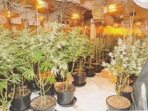 Broxburn cannabis farm was the largest busted by police in Scotland this year