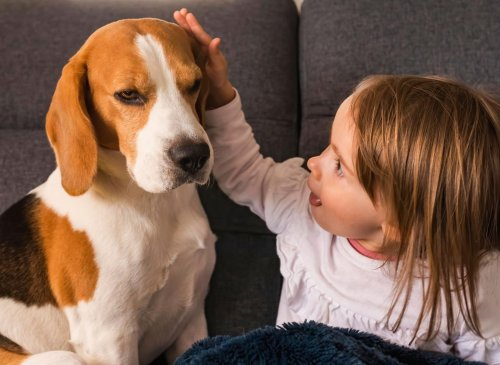 The 10 best dog breeds you should choose from if your family has young children