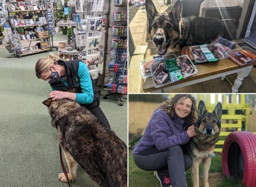 'Loads of people turned up to see him': Watch as community comes together to give dog perfect last few days