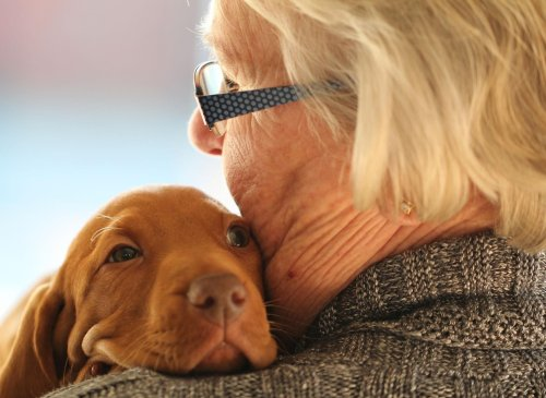 These are 10 of the best breeds that are perfect for more elderly dog owners