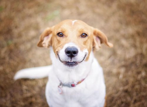 10 of the happiest breeds of adorable dog that will bring joy to your home