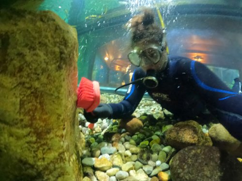 What It's Like to Be an Aquarium Diver