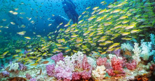 The Best Wreck Dives in Southeast Asia