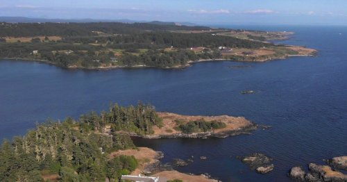 Virus to blame for deer foaming at the mouth, dropping dead in the San Juan Islands