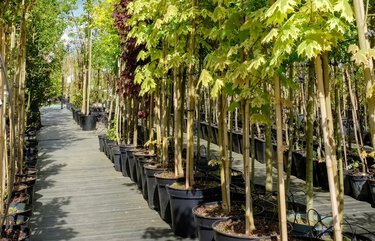 Tips for planting the right tree for your landscape from Trees for Seattle