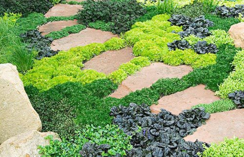 Garden expert on establishing ground cover, eradicating vines and more