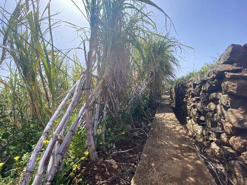 Sal Doce e a Nossa Preciosa Cana-de-Açúcar