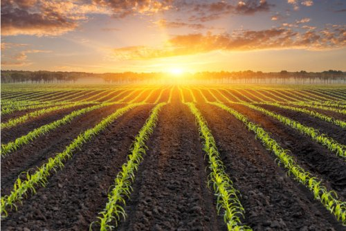 Bill Gates Finds Farmland To Be One Hot Commodity