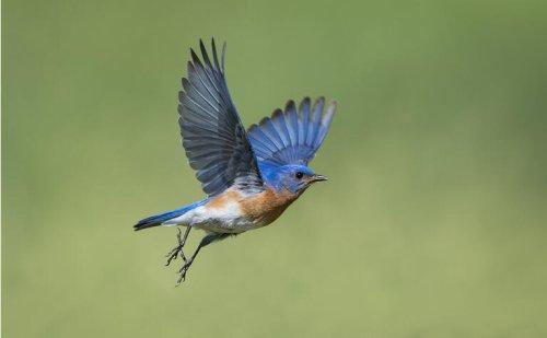 EMA finds no relationship between bluebird bio's Zynteglo and acute myeloid leukemia