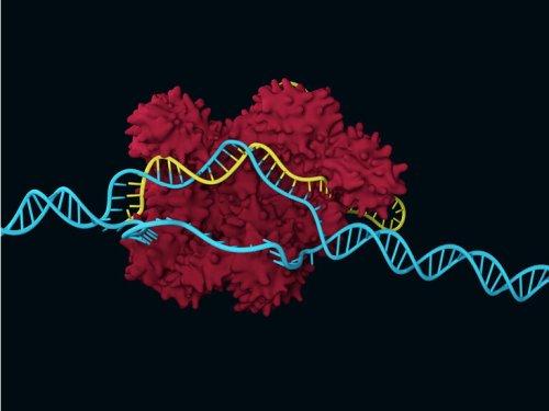 Crispr (CRSP): Bad News For Gene Editing