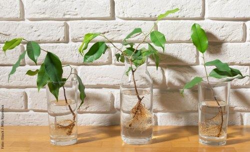 Waterplants: Zimmerpflanzen ohne Erde | selbst.de