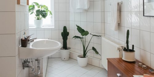 19 Plant-Care Products You Need for Lush, Thriving Houseplants