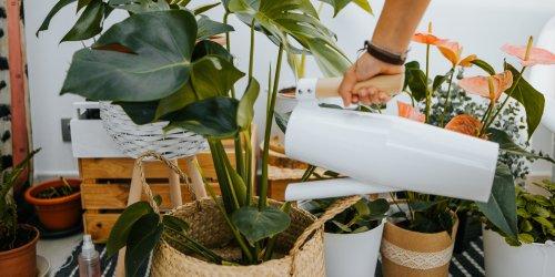 23 Practically Indestructible Plants for Beginner Plant Parents
