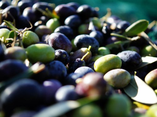 A Beginner's Guide to Olives: 14 Varieties Worth Seeking Out