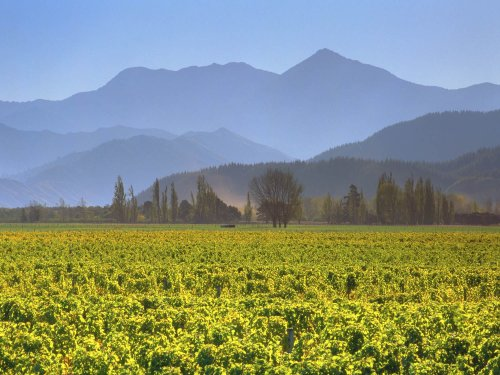 A Beginner's Guide to New Zealand Wine