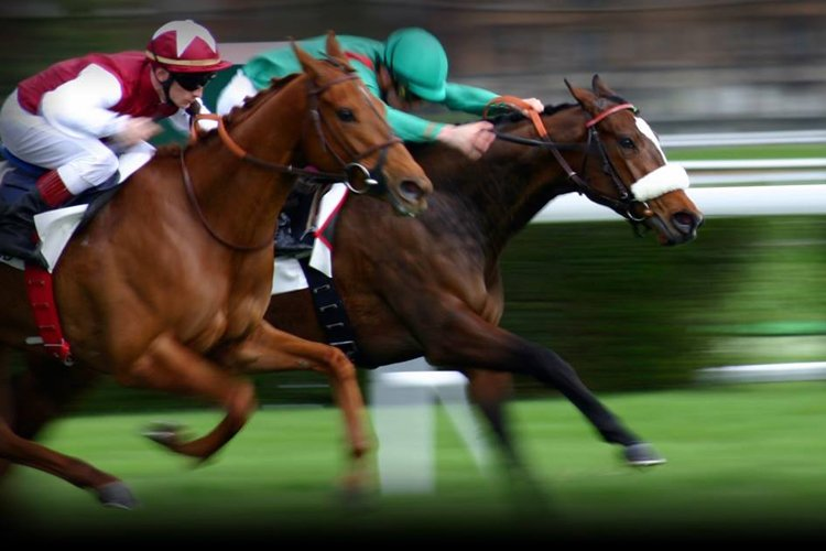 http://sevelace.com/how-betting-the-right-horse-at-the-right-time-can-make-you-a-big-winner/ - cover