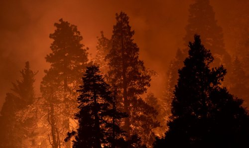 Monday Morning Headlines: Giant Forest Mostly Safe as Other Sequoia Groves Threatened By Fire