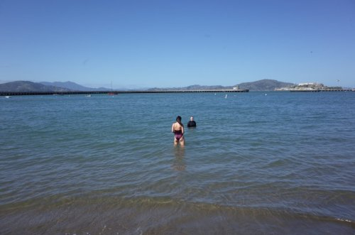 Swimming in the Bay is the Opposite of Late-Stage Pandemic Life - SF Weekly