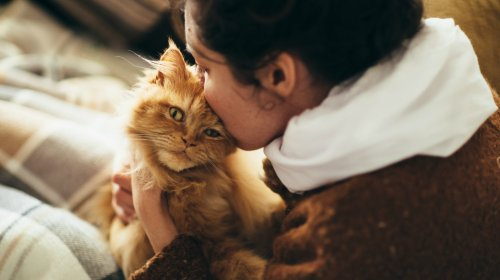 The World's Most Affectionate Cats
