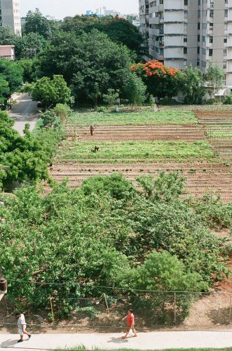 Food Sovereignty and What We Can Learn from Cuba