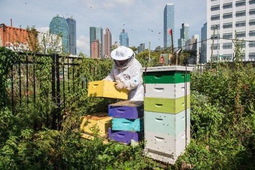 Stadt Gärten: Die neue Begeisterung für Urban Farming