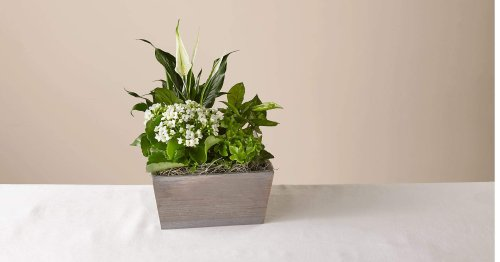 Express warmth to your loved ones with this peaceful garden