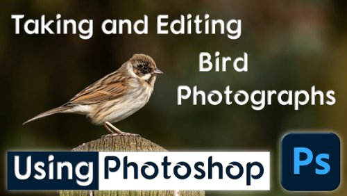 Shoot & Edit Beautiful Bird Photos with These Tips & Tricks (video)