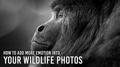 Bring Wildlife Photos to Life with 5 Powerful Tips