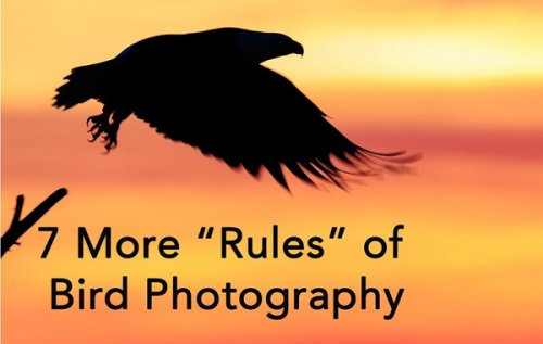 Shoot Better Bird Photos with These 7 Tips from Expert Tim Boyer (VIDEO)