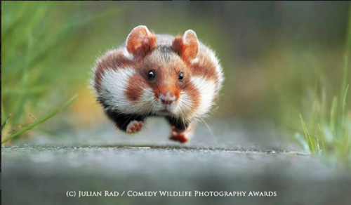 Have a Laugh with These Hilarious Images from the Annual Comedy Wildlife Photography Awards