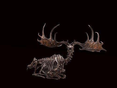 Biggest. Antlers. Ever. Meet the Irish Elk