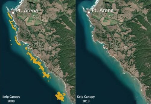 Satellite Imagery Shows Northern California Kelp Forests Have Collapsed