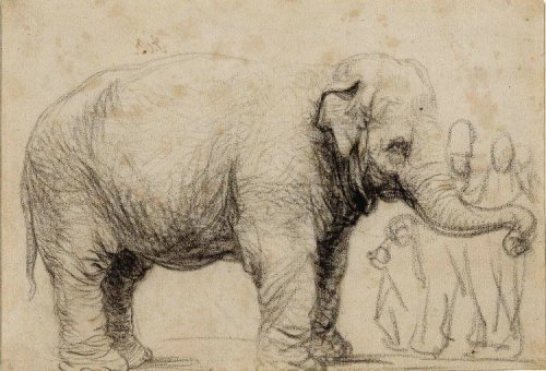 The Tragic Life of Hansken, 'Rembrandt's Elephant'