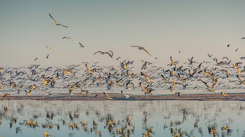 Tell the state of CA to protect the Salton Sea's landscape and people! — AddUp.org