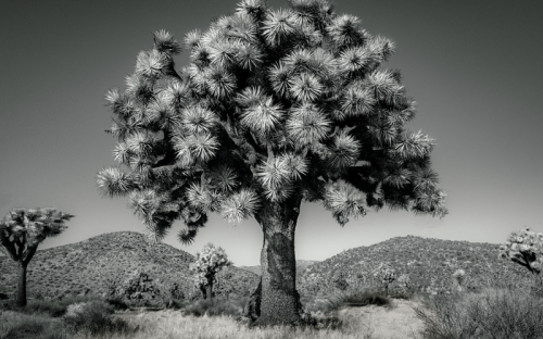 An Artist's Quest to Document the World's Oldest Trees