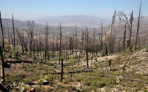 The Creek Fire One Year Later