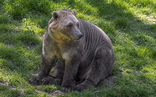 Meet the Polar Bear of Tomorrow