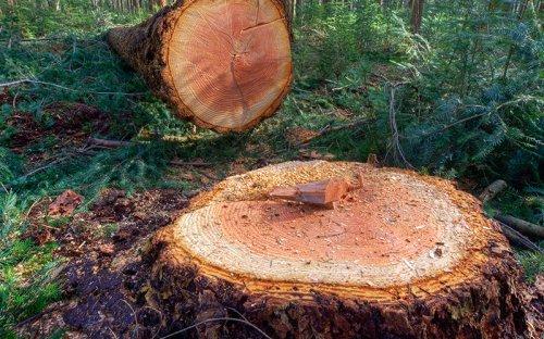 "Beware the ""Danger Tree"""
