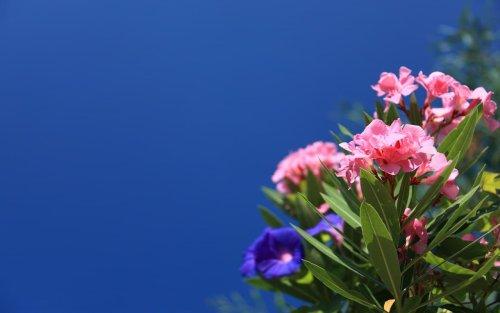 Piante perenni le 5 varietà più belle da scegliere per il tuo giardino