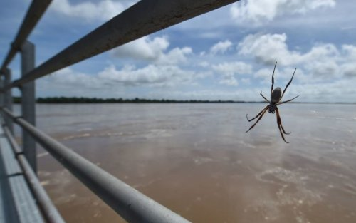 Australia, invasione di ragni e ragnatele nello Stato di Victoria