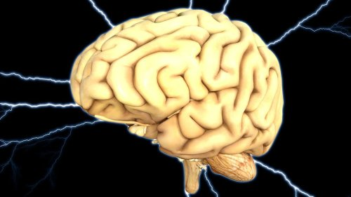 Brain activity once thought to be background noise is actually required