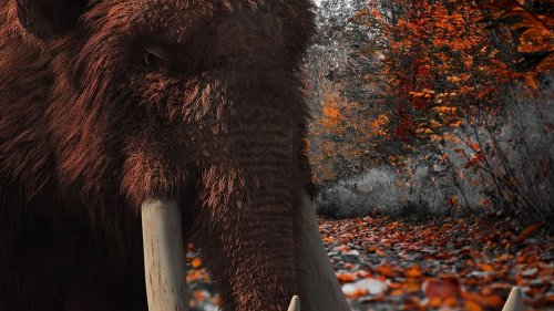 New research finds humans didn't cause woolly mammoth extinction
