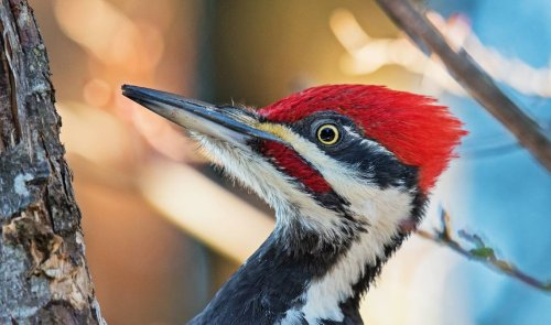 Watch woodpecker destroy hidden camera one obnoxious peck at a time