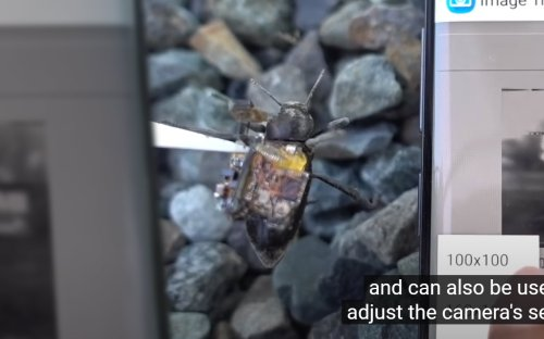 Beetle camera research shows turning tiny head better than whole body