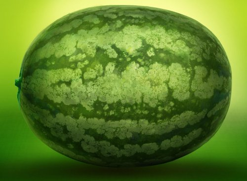 Scientists rewrite the origins of the humble watermelon
