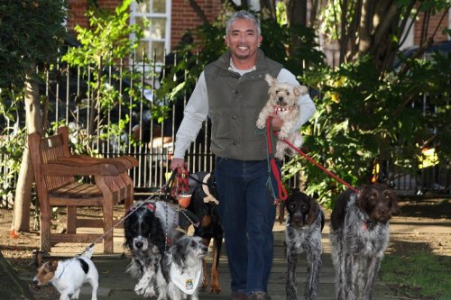 Cesar Millan's Method of Dominating Dogs Got Debunked a Long Time Ago. Why Is It Still So Popular?