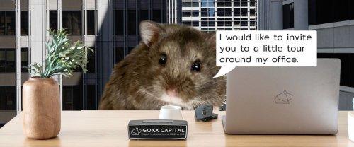 Voici Mr. Goxx, le hamster investisseur qui ridiculise Wall Street et les cryptos