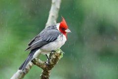 Discover best birding